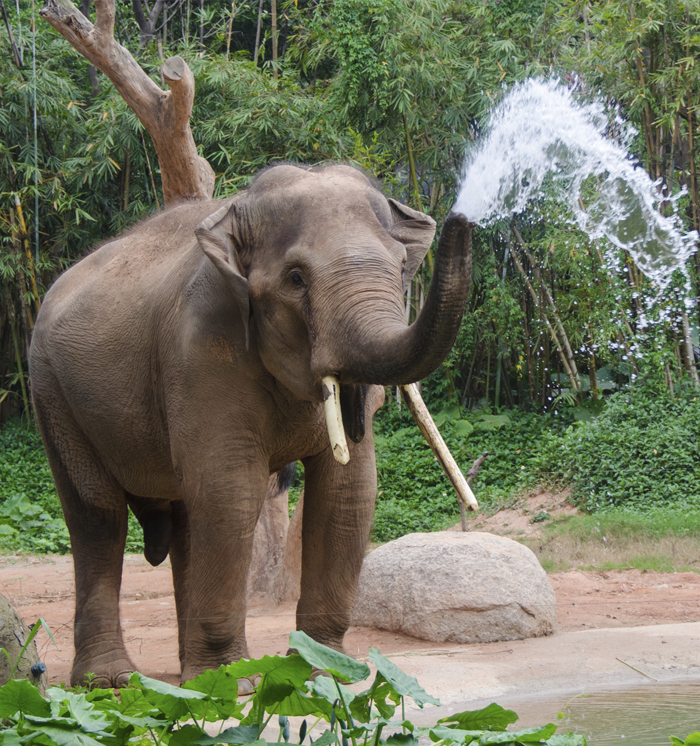 Zoo Atlanta, Georgia