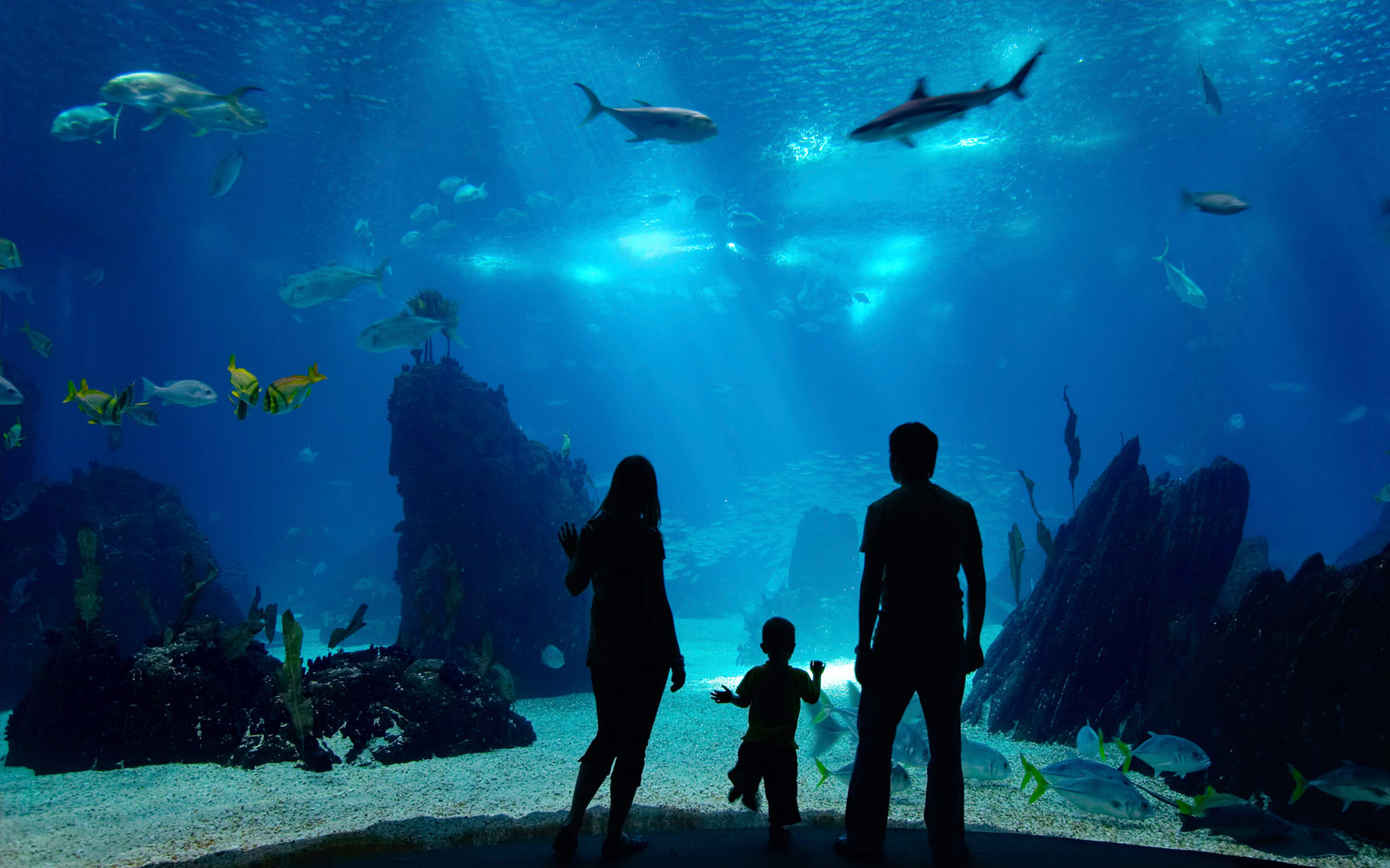 Tennessee Aquarium Hours >> Georgia Aquarium : Interactive Animal Adventures