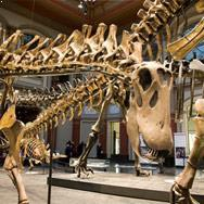 Atlanta Fernbank Museum of Natural History at Georgia