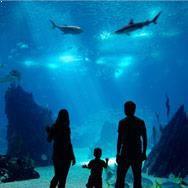 Georgia Aquarium in Atlanta, GA